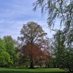 Branitz Park Tree