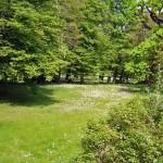 meadow in Cottbus