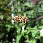 caught in a spiderweb